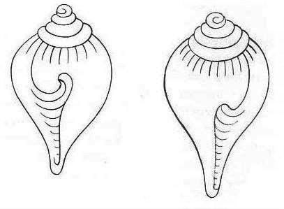 Caracola 2.jpg